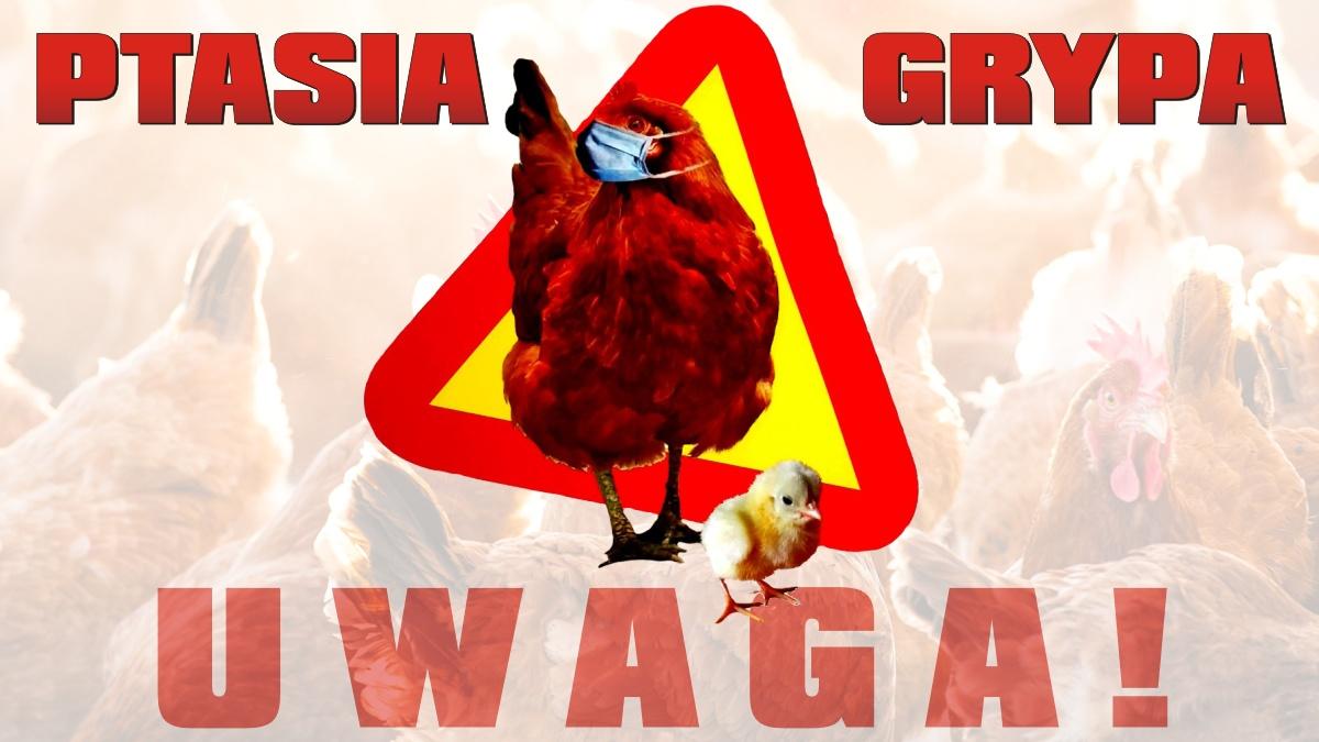 Ilustracja do informacji: Wysoce zjadliwa ptasia grypa na terenie Gminy Reszel